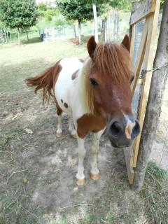 Agriturismo L'Arca Pony